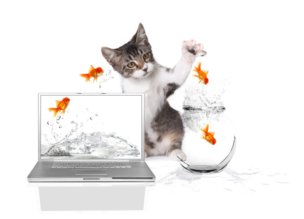 Playful Kitten Pawing at Gold Fish Jumping out of Water